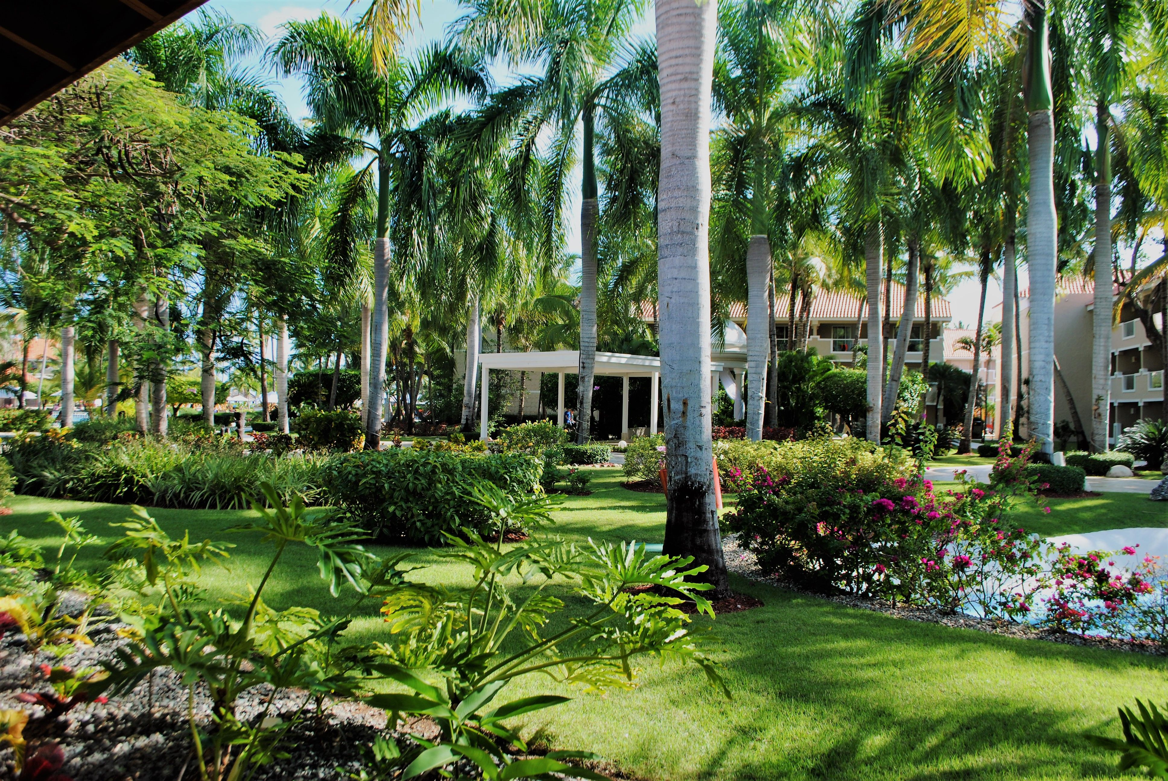Dreams Palm Beach Punta Cana -- Redefined Luxury in a Palm-Studded ...