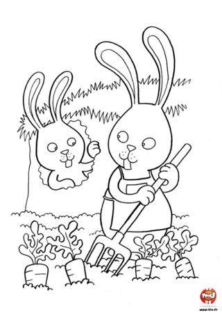 Photos coloriage jardin potager page 2 coloriage du - Dessin de potager ...
