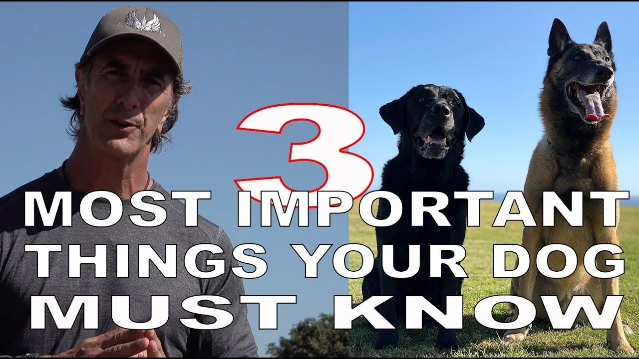 3 Most Important Things Your Dog Must Know Robert Cabral Dog