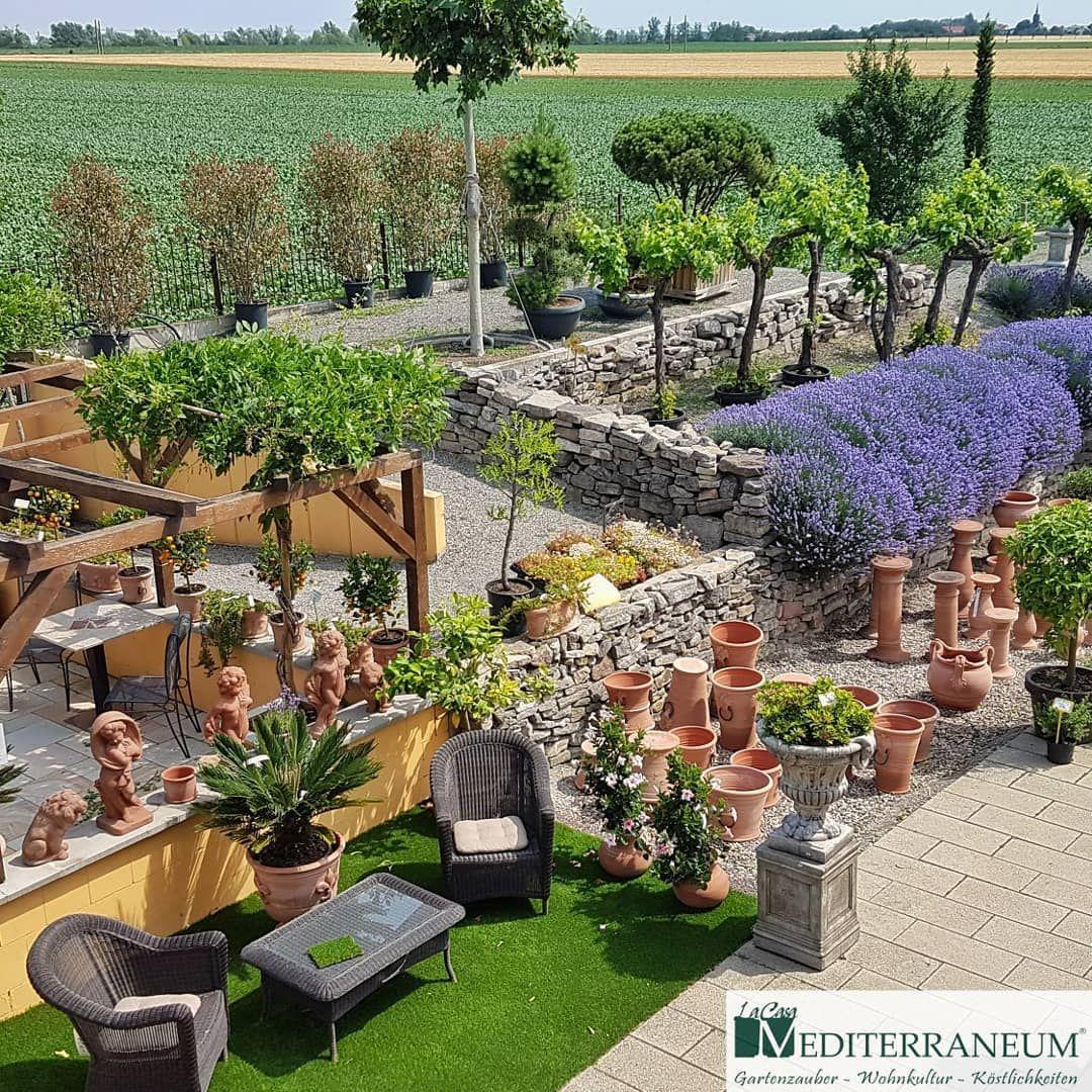 Sommerfest Am Samstag 29 Juni 2019 Ab 10 00 Uhr Gartenliebe Gartenarchitektur Luxuslife Olivenbaum Koethe Gartenbau Gartengestaltung Mediterraner Garten
