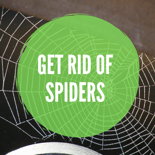How To Get Rid Of Spiders In Your House Basement Or Garage Get Rid Of Spiders Spider Rid