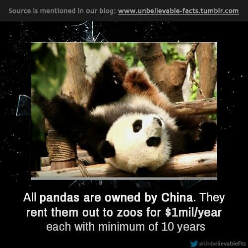 Panda Facts | Amazing Facts | Pinterest | Thoughts, Babies and ...