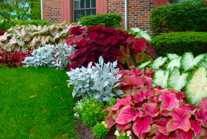 colorful shade plants landscaping