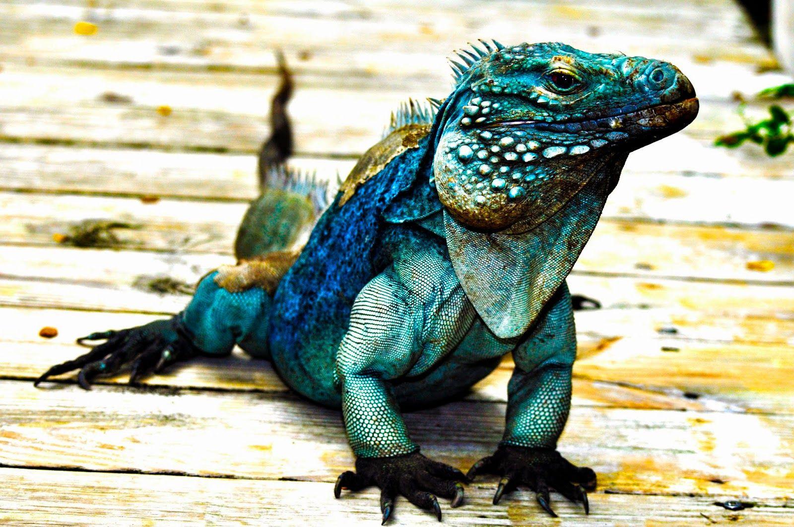 Tony Walton Blue Iguana