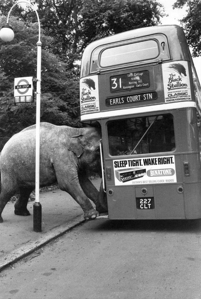 Pin von Doug Rutherford auf Fluxus | Pinterest | Elefanten ...