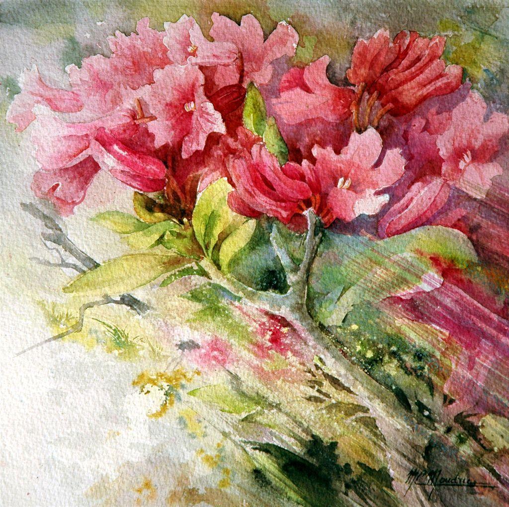 Marie Claire Moudru Aquarelle Google Search Peintures Florales