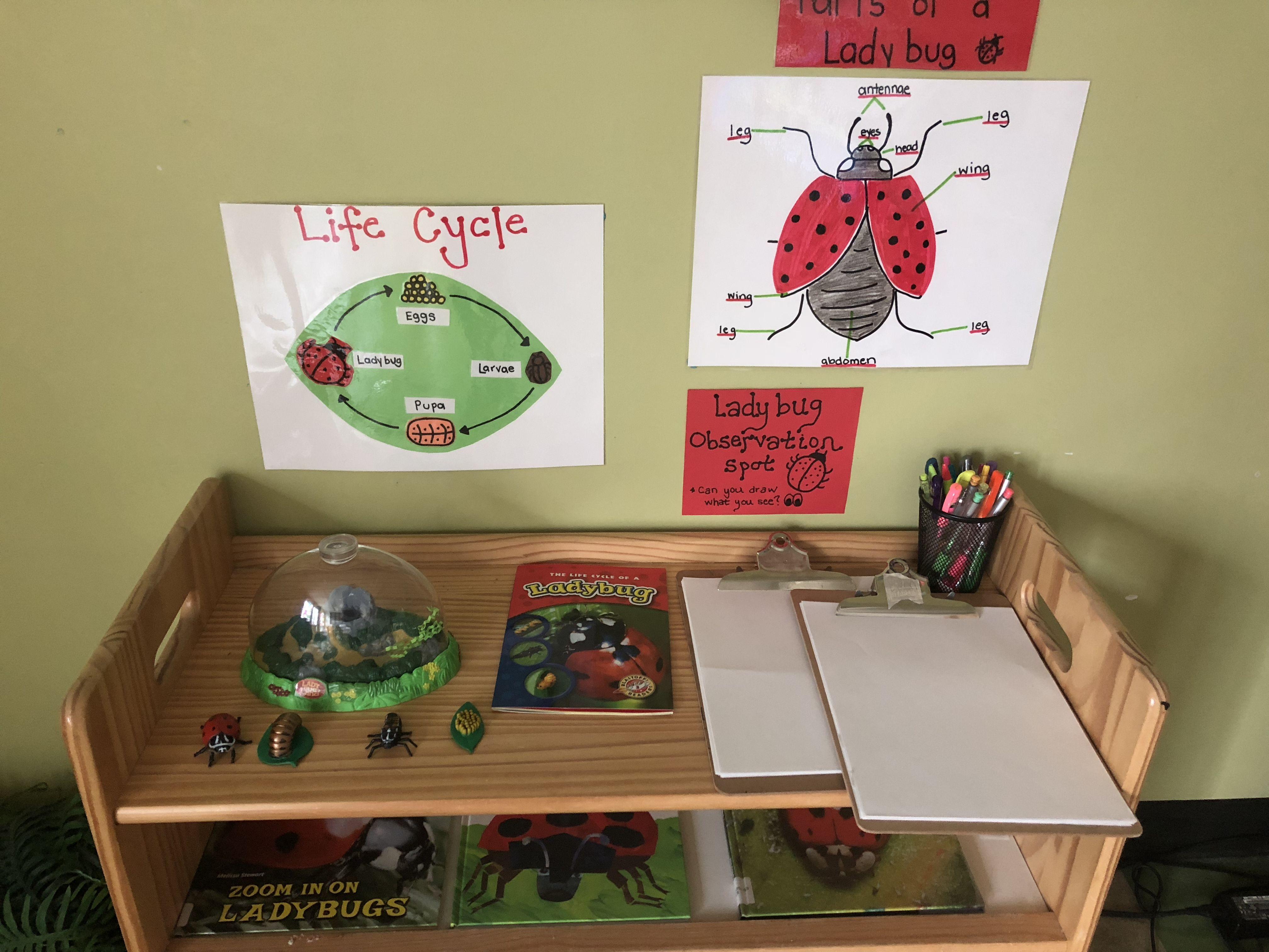 Ladybug Life Cycle Science Center With Real Ladybugs