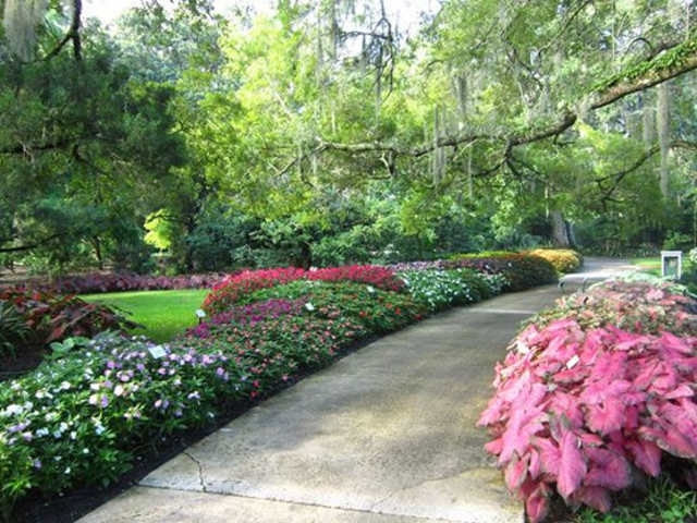 Harry P. Leu Gardens. Botanical GardensWedding VenuesOrlandoMilitary