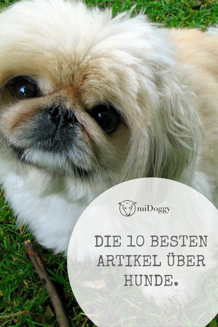 || #Hund || Ideen || #Hunde || Tipps || Tricks || Ideen || Liebe || Welpen || Bilder || #Hundeblogger