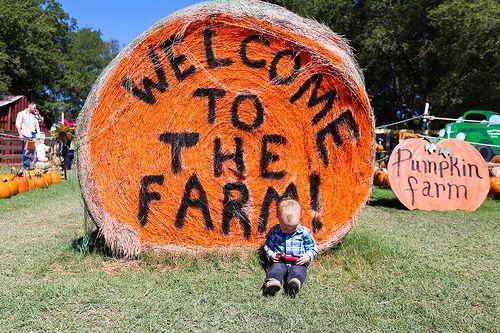 The Big Orange Pumpkin Farm