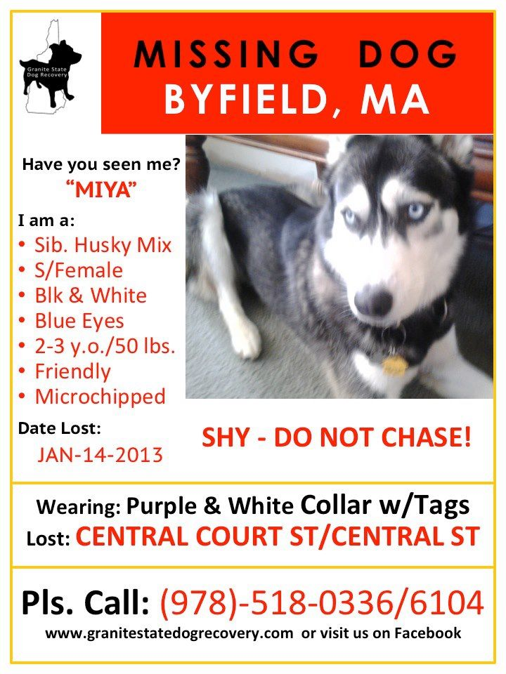 Lost Dog Lost Husky Husky Byfield Mass Losing A Dog Losing A Pet Find Pets