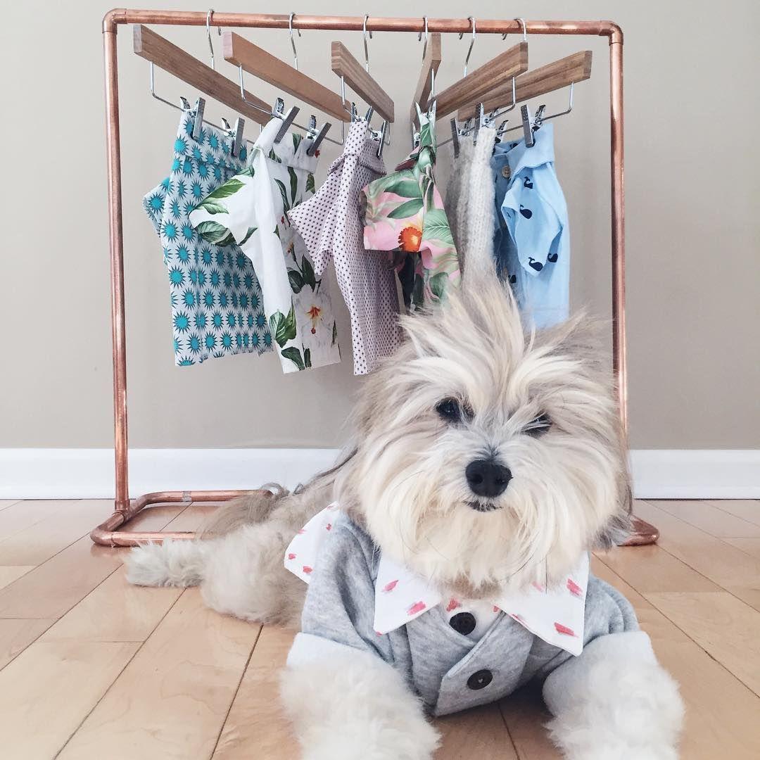 Dog Clothing Rack By Dog Threads Pomapoo Modern Dog Wardrobe