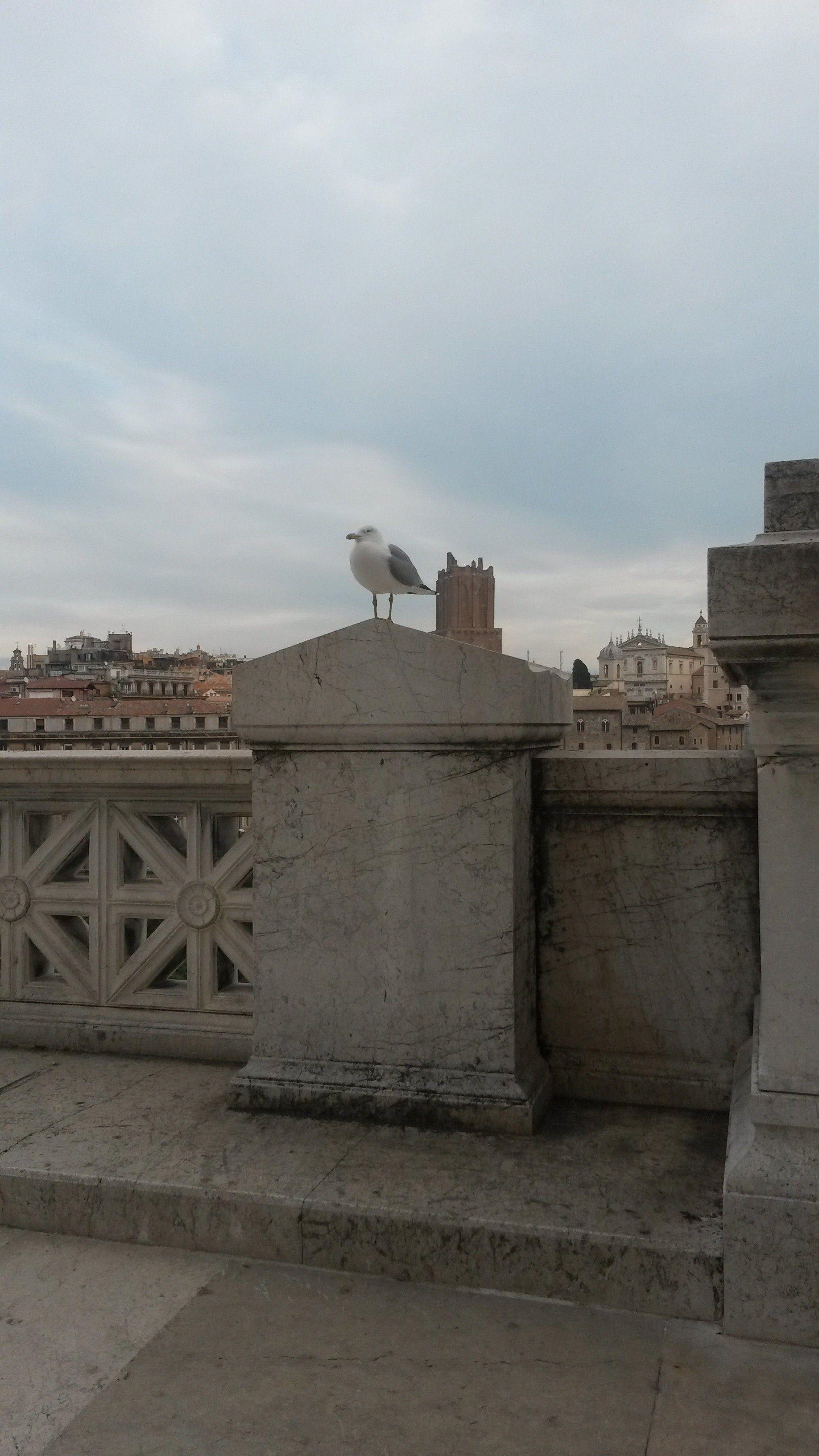 Gabbiano..a Roma!