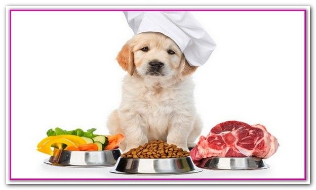 Best Dog Food For Dogs With Allergens Purina Pro Plan Focus
