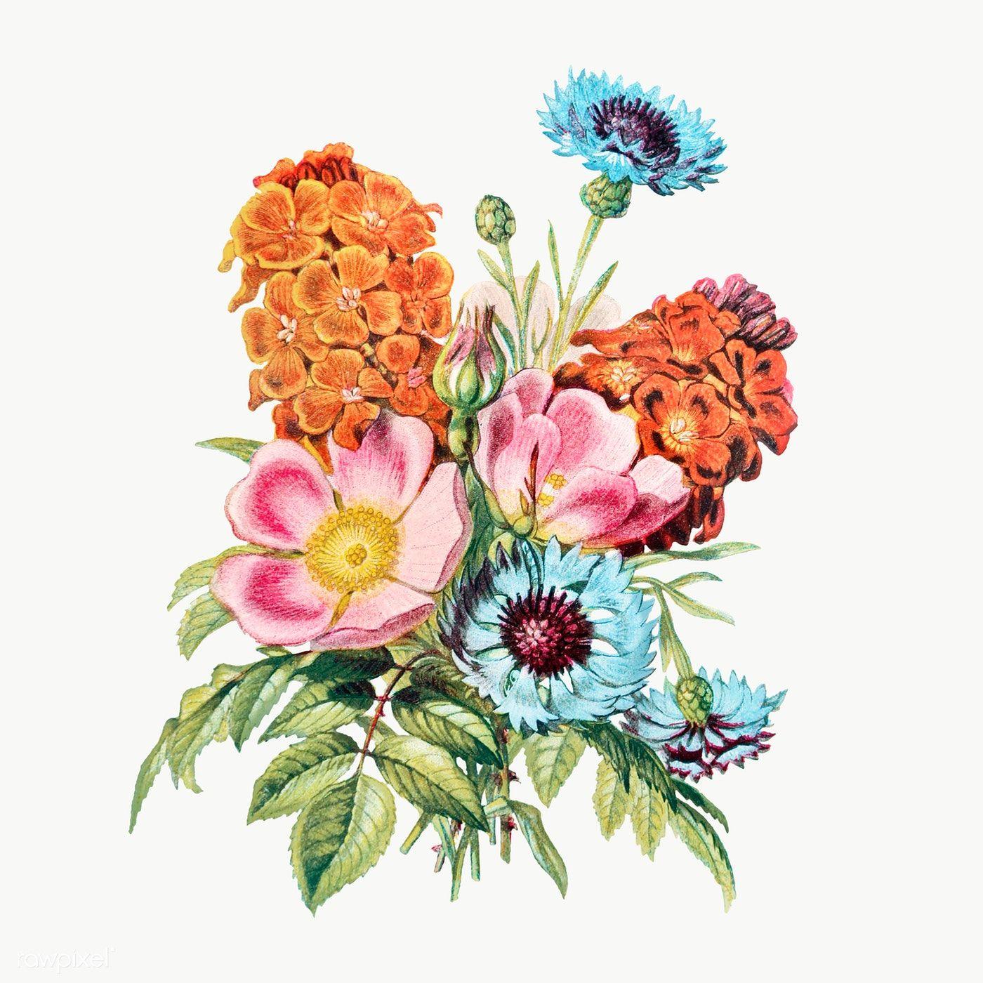 Vintage Flower Bouquet Transparent Png Premium Image By Rawpixel Com Flower Bouquet Drawing Flower Illustration Summer Flower Bouquet