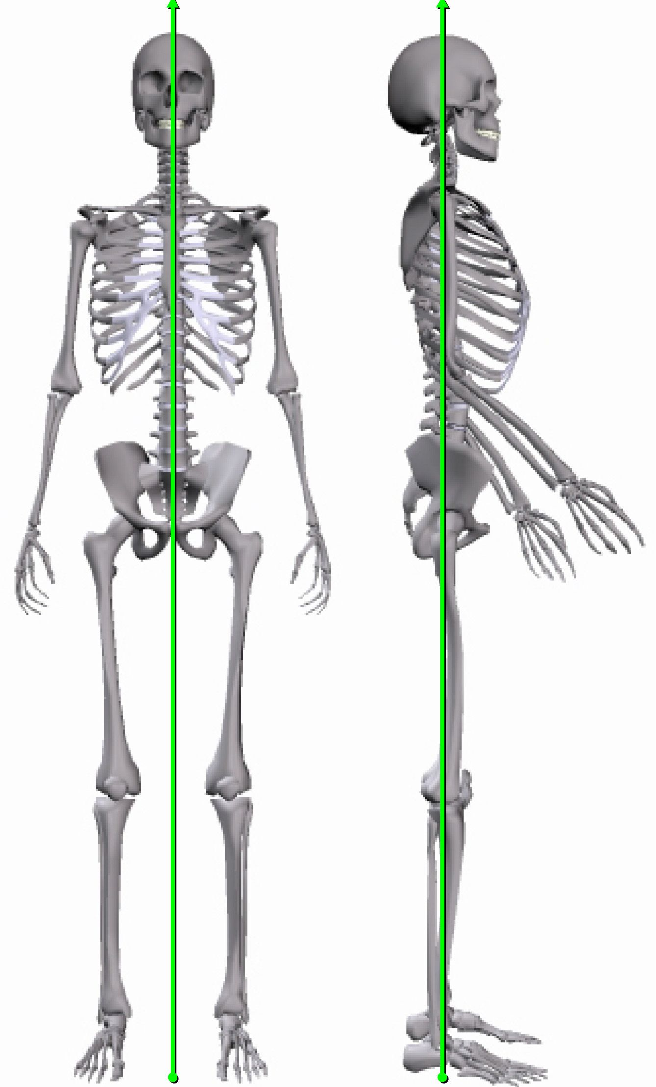 postural analysis is a window to your spine that allows us to treat you more specifically