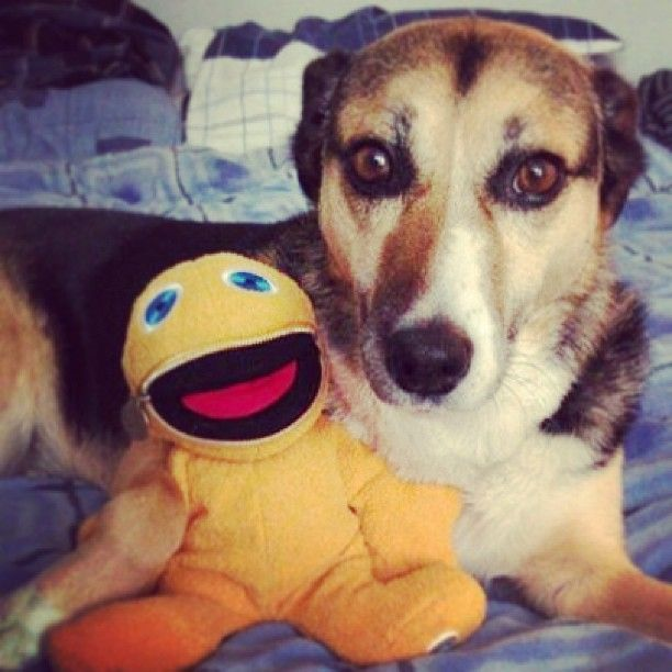 """""""Maizy & I love Zippy. We also love the Mind Charity for tackling the mental health stigma!"""""""