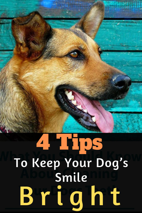 4 Tips To Keep Your Dog S Smile Bright With Images Smiling