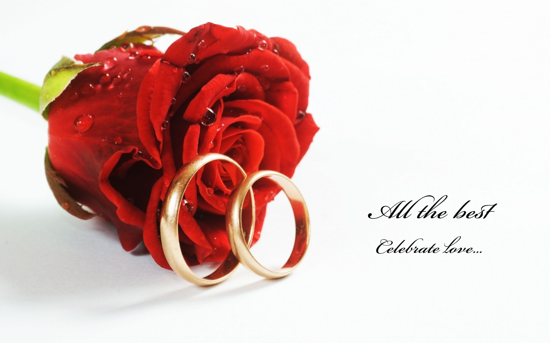 Hd wallpaper red rose - Red Roses Hd Wallpapers Share Your Moments With Ourdunya