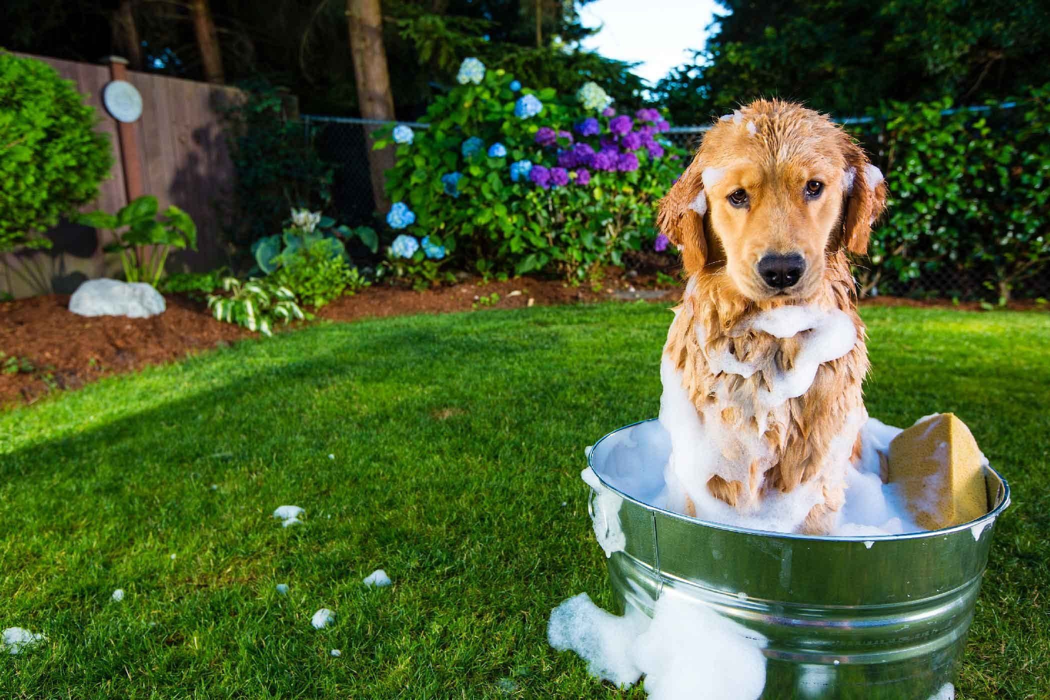 How To Train Your Dog To Love Bath Time Dog Shaking Dogs