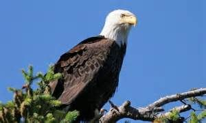 san juan islands wildlife - Bing images
