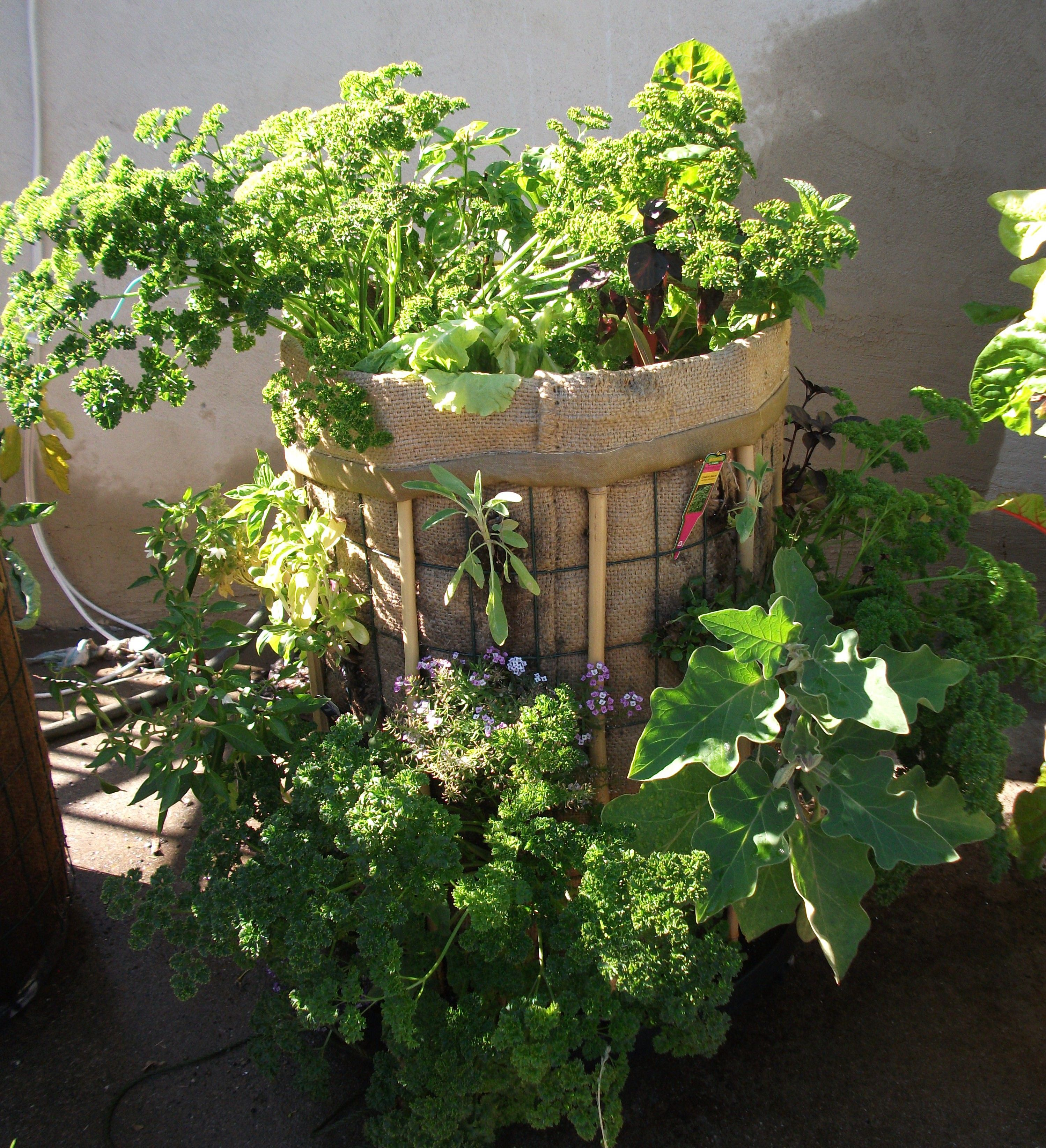 20 sq feet of gardening!!! WOW!! Grow your own food even in a tiny apartment! Srsly Easy!