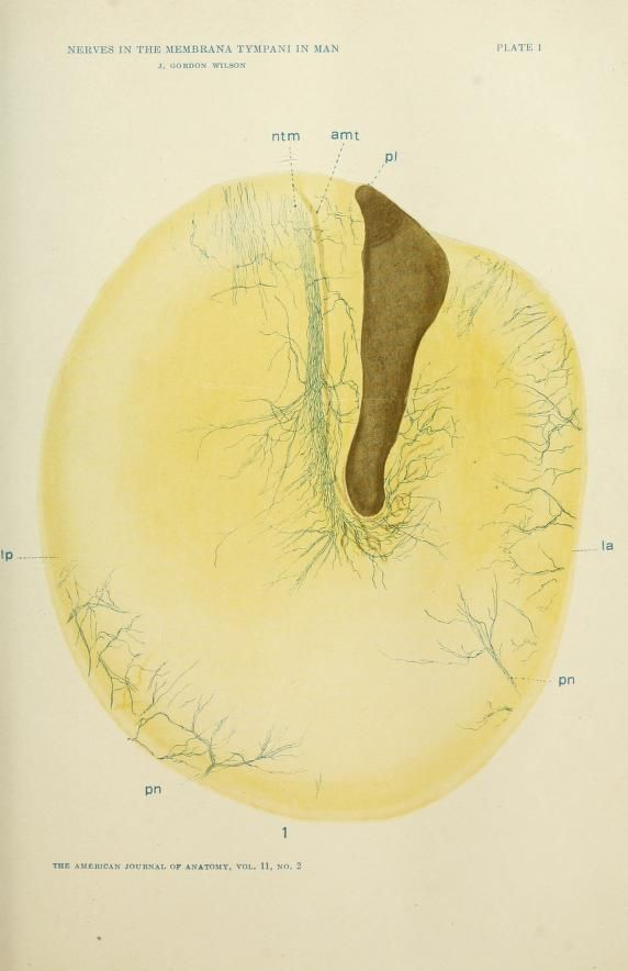 The American Journal Of Anatomy Scientific Medical Botanical
