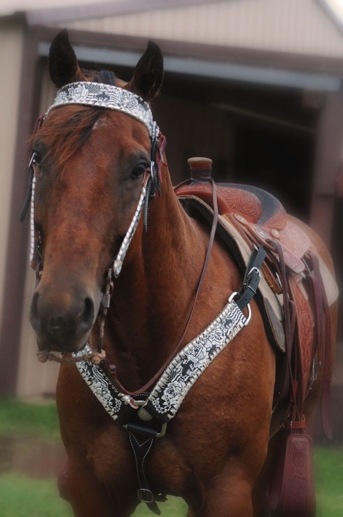 Quincy Tack and Belts | stsranch.com