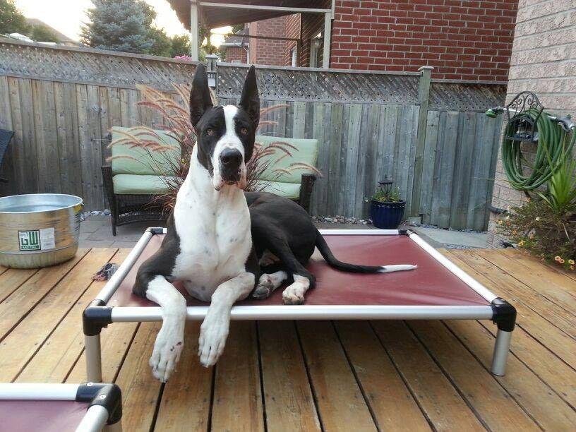 All Aluminum Dog Bed Kuranda dog beds, Dog bed, Great