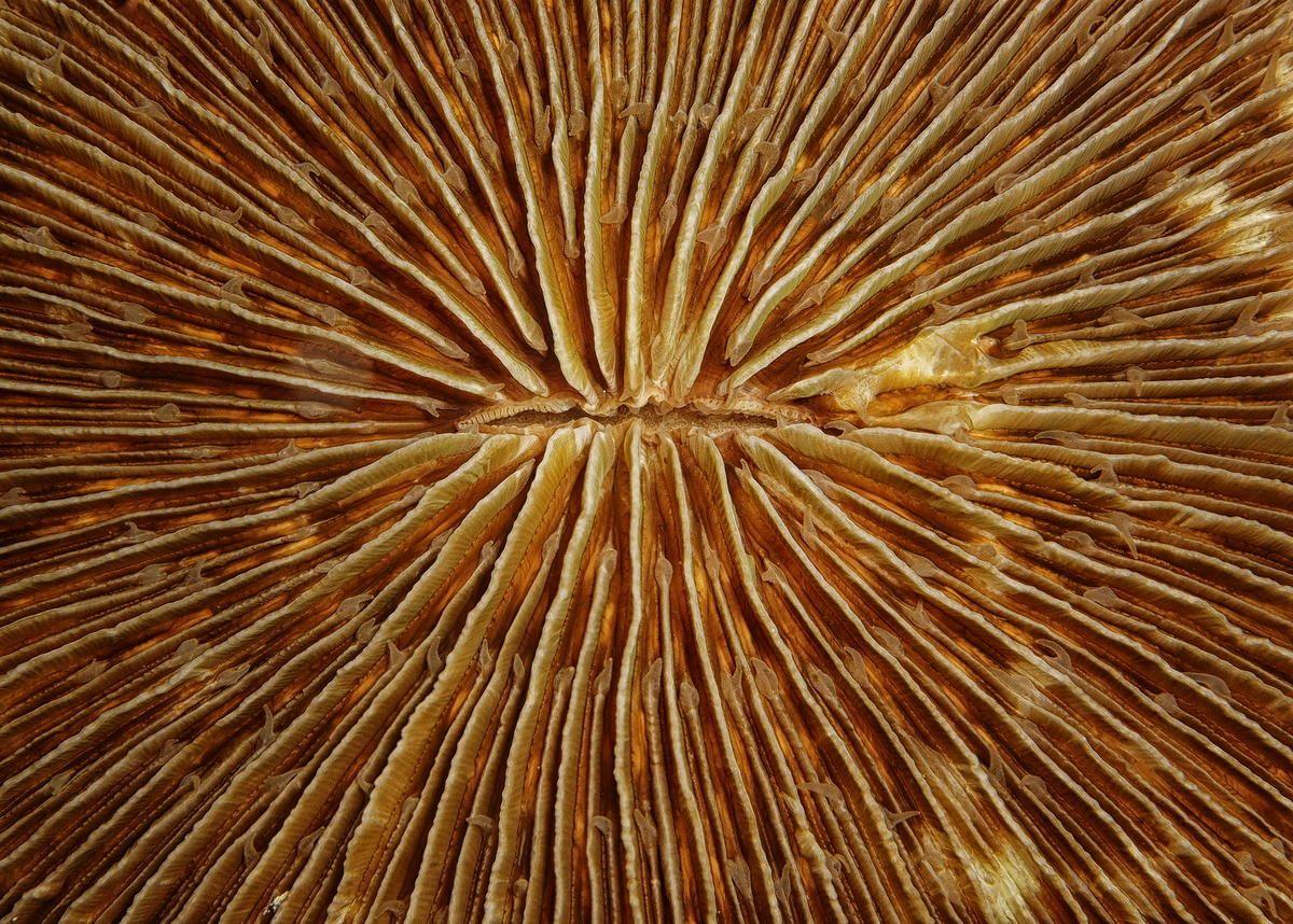 Makroaufname einer Koralle