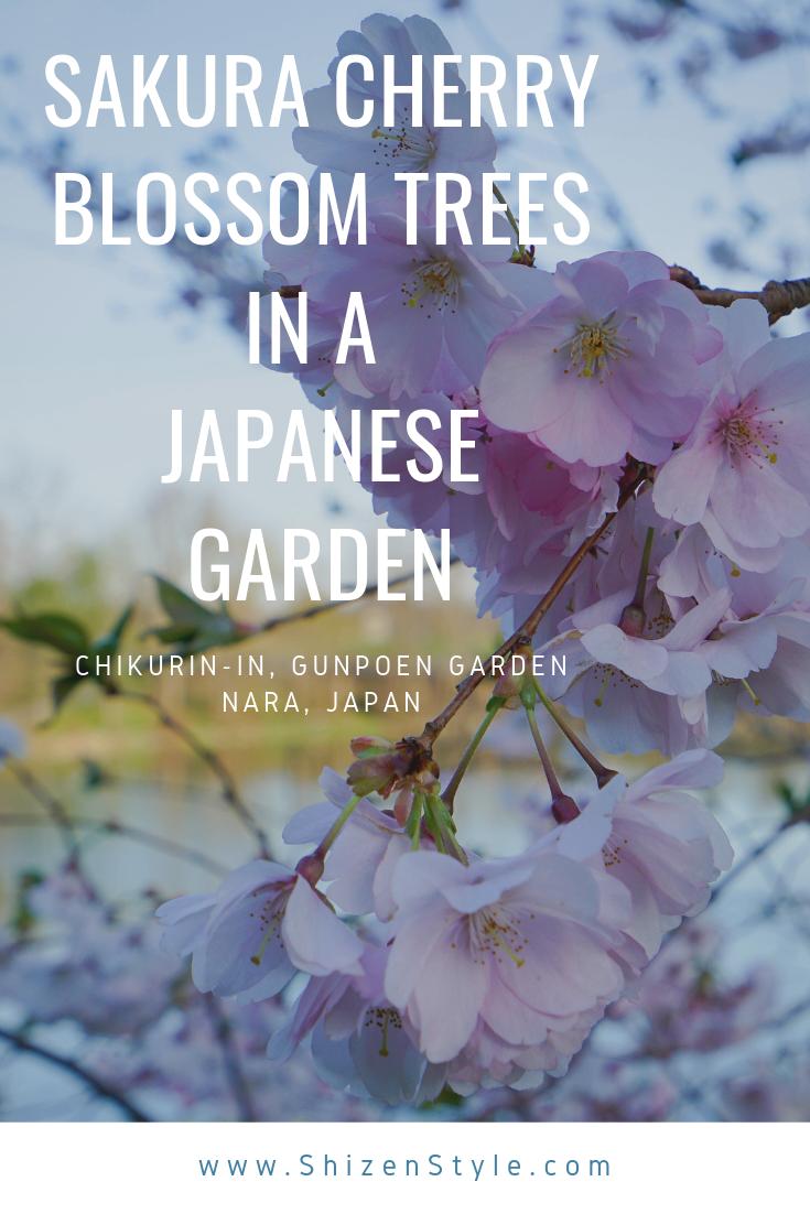 Sakura Cherry Blossom Trees In A Japanese Garden Japanese Garden Sakura Cherry Blossom Cherry Blossom Tree
