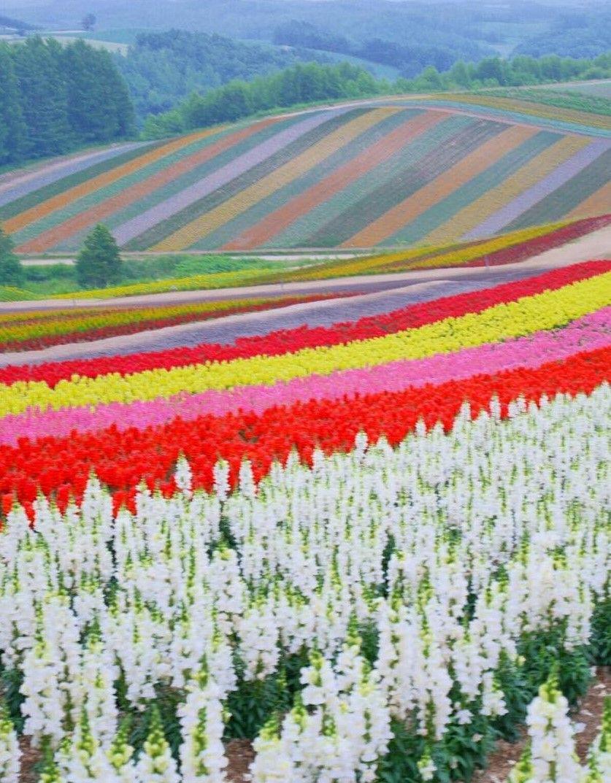 Japan Garden Flowers: Panoramic Flower Gardens Shikisai-no-oka, Biei, Hokkaido