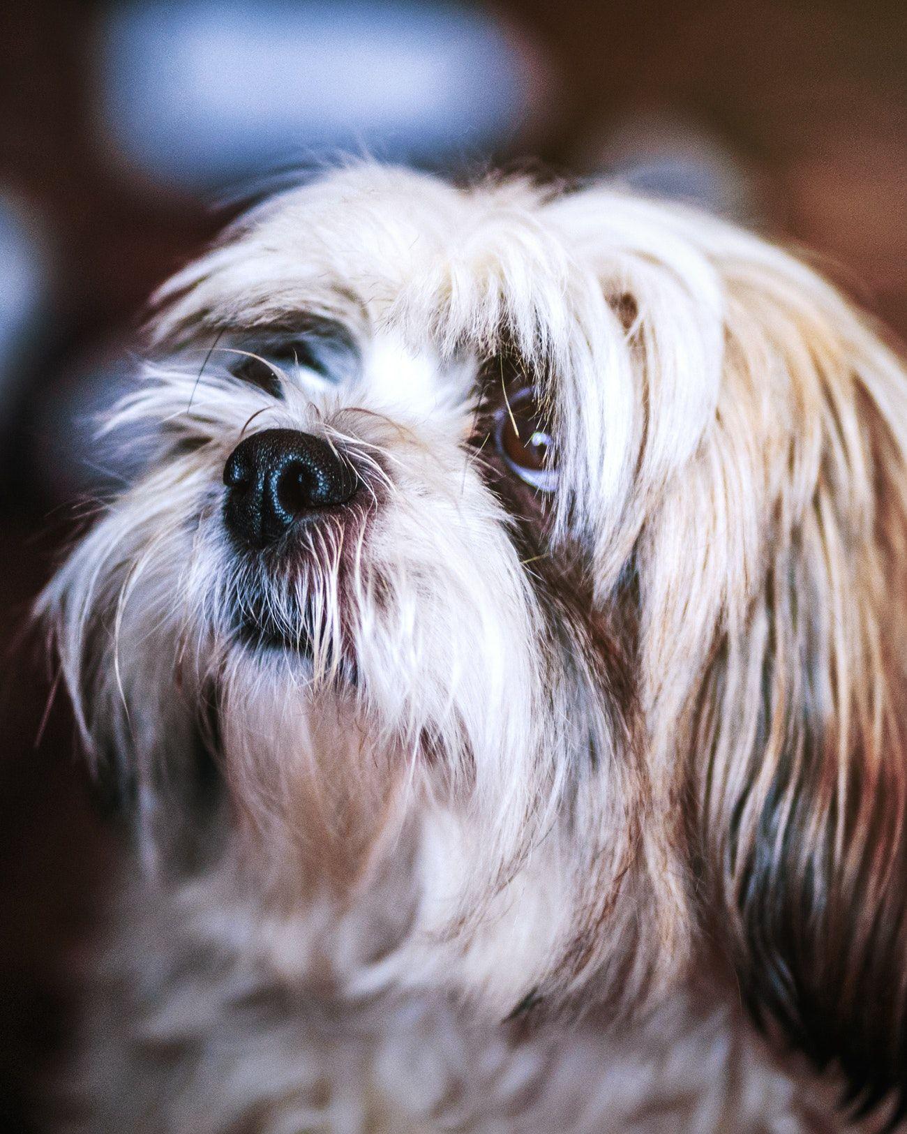 Home Dog nose, Dogs, Meds for dogs