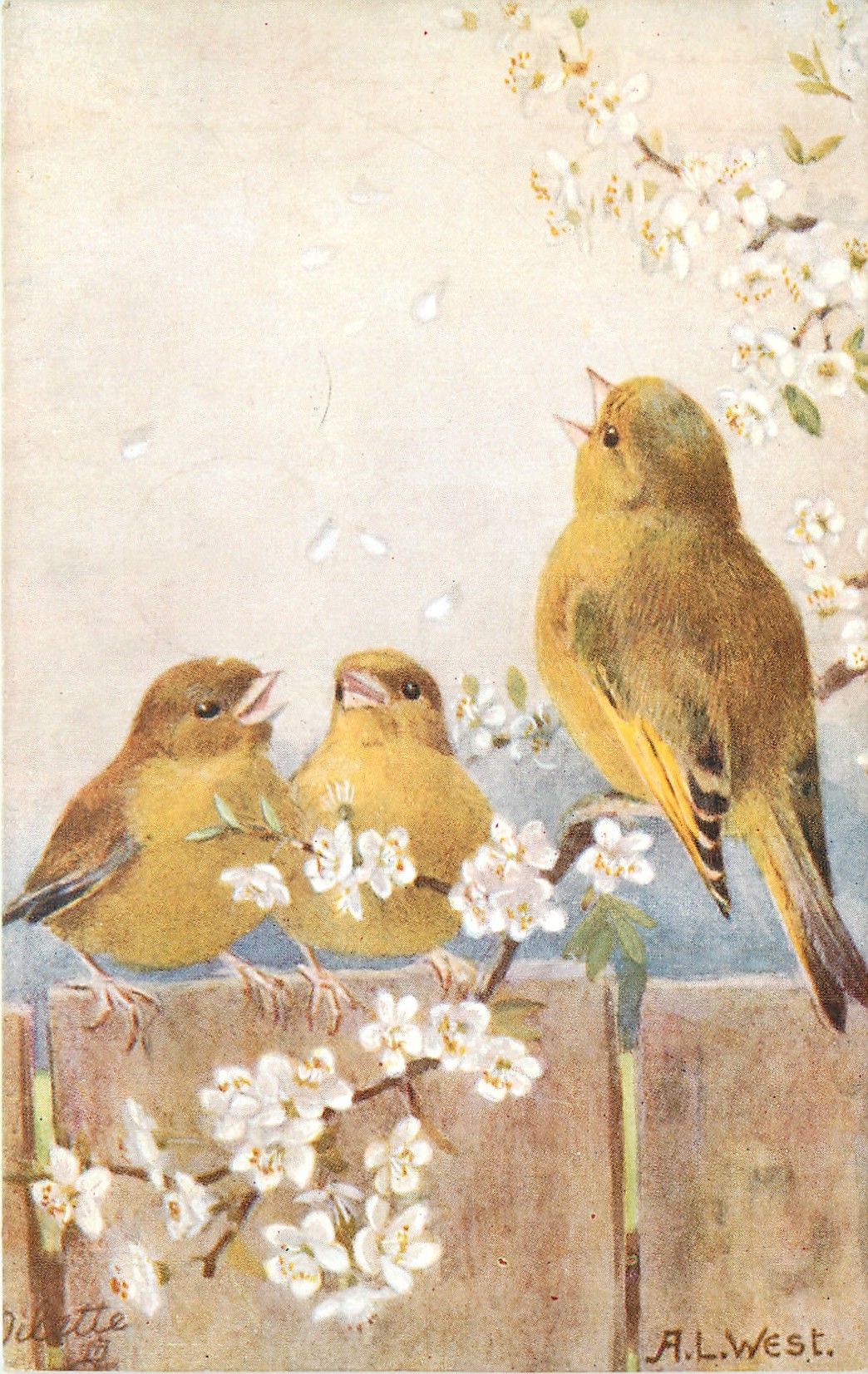 three yellow/brown finches, one on blossom branch, two on fence - Art by A.L. WEST