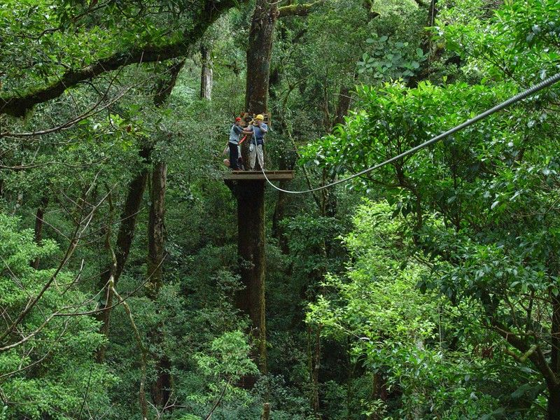 Costa Rica Treetop Canopy Tour - zip line - Tamarinda & Costa Rica Treetop Canopy Tour - zip line - Tamarinda | Places Iu0027d ...