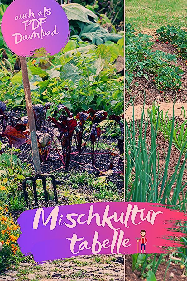 Photo of Mischkulturtabelle für Gemüse