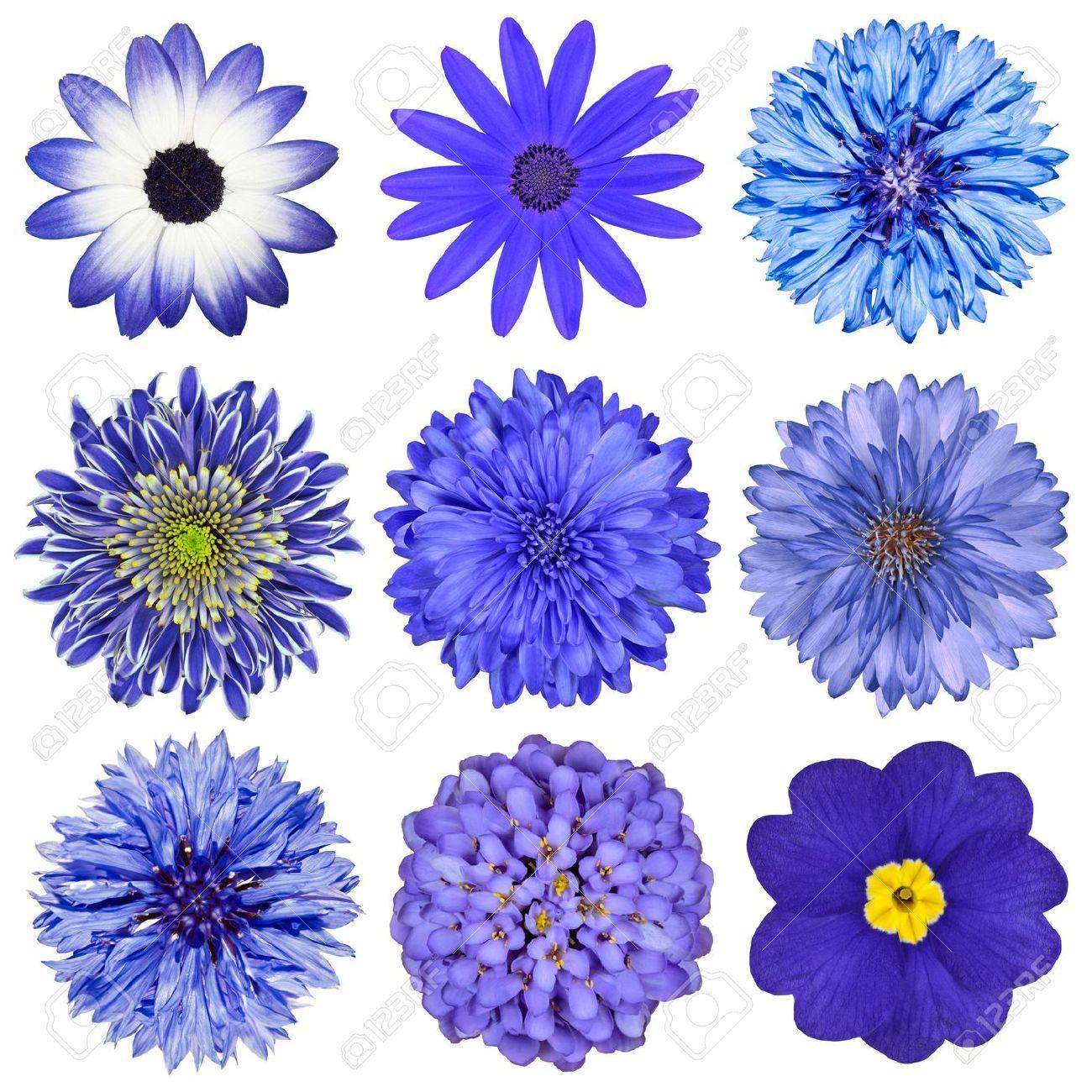 Pin On Flower Tattoo