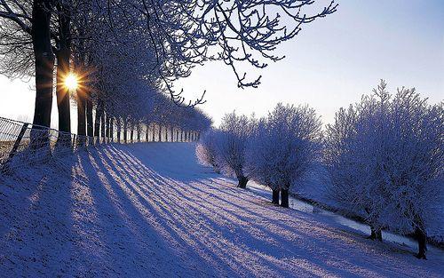 Winter In Nederland Winter In The Netherlands Winter Landscape Winter Wallpaper Hd Winter Scenery