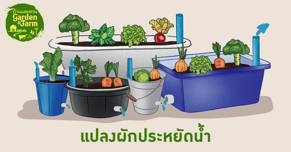 ปล กผ ก ก ว น ถ งได ก น อยากก นผ กให อร อยต องร ระยะเวลาท เหมาะสม บ านและสวน ในป 2021 ปล กผ ก สวนคร ว กระบะปล กผ ก
