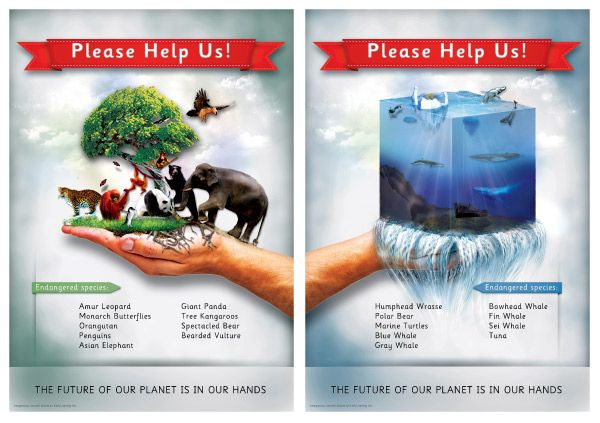Saving Lives With Graphic Design >> Endangered species posters | School Ideas | Animals, Environmental posters, Animal posters