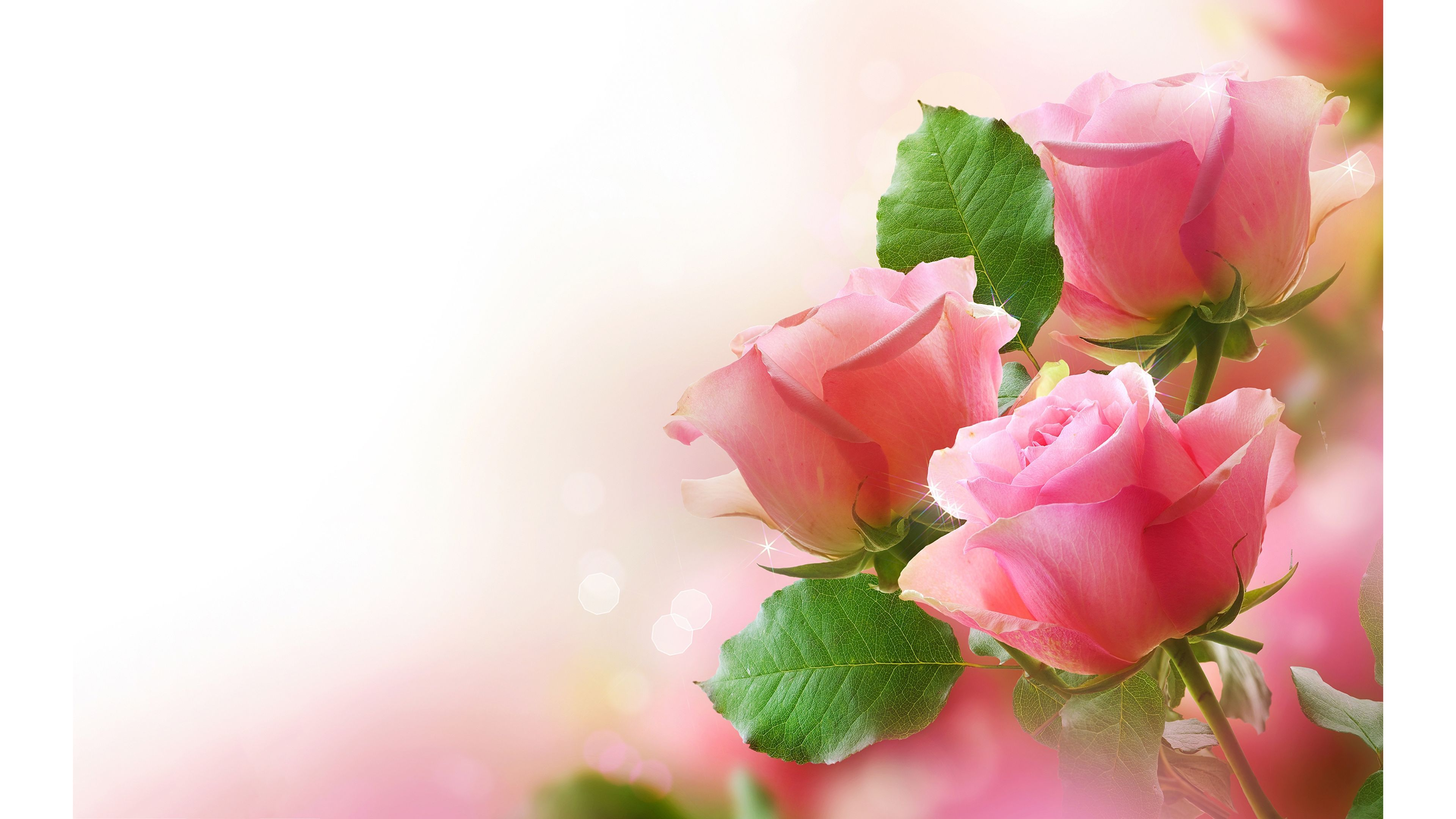 Pink Roses Flower 4k Wallpapers Flowers Ulta HD 4K