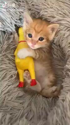 So Susses Baby Lustige Katzen Baby Suss Katzen Lustig Cute Baby Animals Cute Animal Videos Cute Cats And Kittens