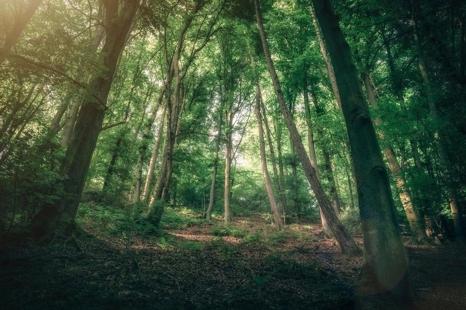 كوكتيل صور خلفيات Hd وبس أفضل خلفيات الكمبيوتر عالية الجودة Tree Plants Tree Trunk