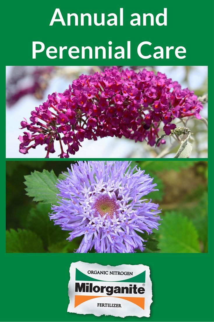 Enjoy Colorful Flowers With Less Pruning And Grooming By Selecting