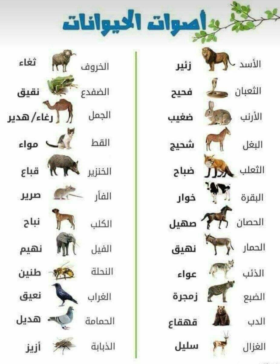 اصوات الحيوانات Arabic Language Learn Arabic Online Learning Arabic