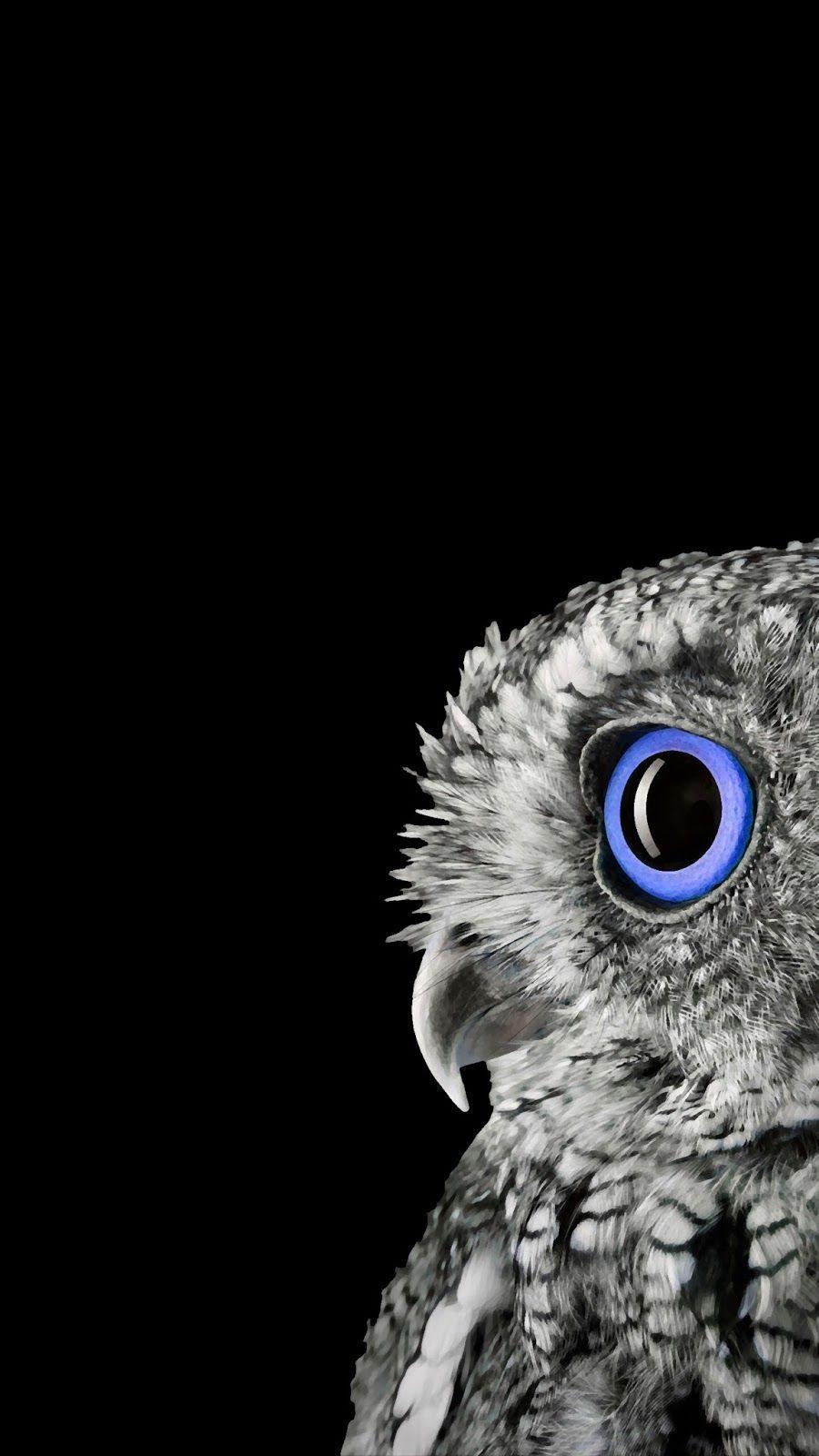Blue Eye Owl Wallpaper Owl Wallpaper Owl Wall Art Galaxy Phone Wallpaper