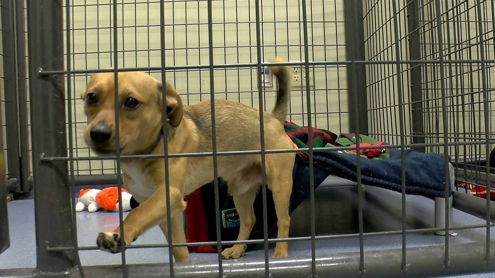 Record high numbers of pet adoptions in 2017 Toledo News