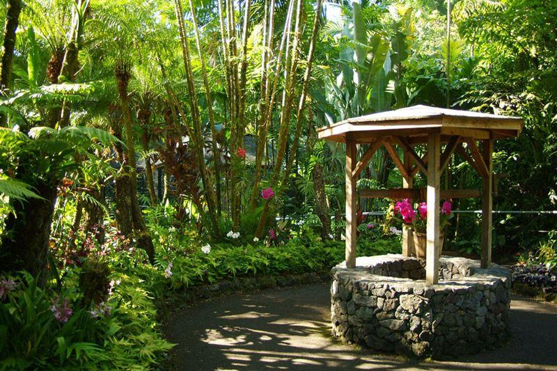 Hawaii Tropical Botanical Garden | Kathy Ireland Worldwide (