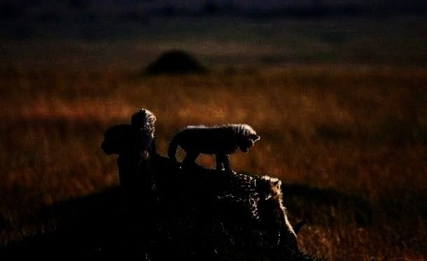 duty to climb all over ones parents  When one is a baby mammal it is ones duty to climb all over ones parents mammals When one is a baby mammal it is ones duty to climb a...