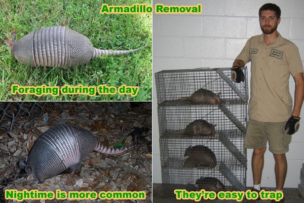 Armadillo Tring Tips And Bait Advice